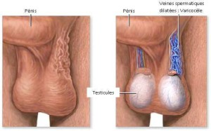 Figure1.Anatomie